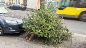 回収されるクリスマスツリー