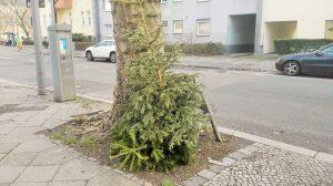 回収されるクリスマスツリー2