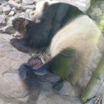 ベルリンにあるドイツ最古の動物園は子供から大人までみんなにおすすめ!